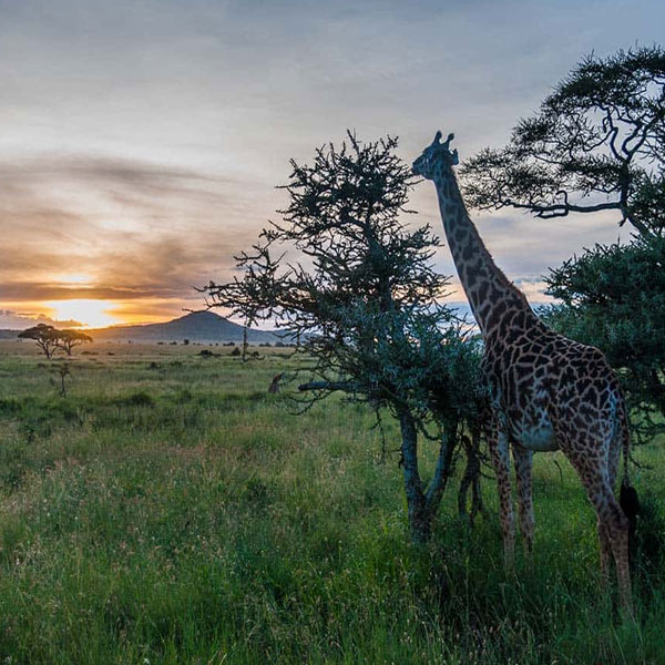 best-time-to-visit-tanzania-tips-fig