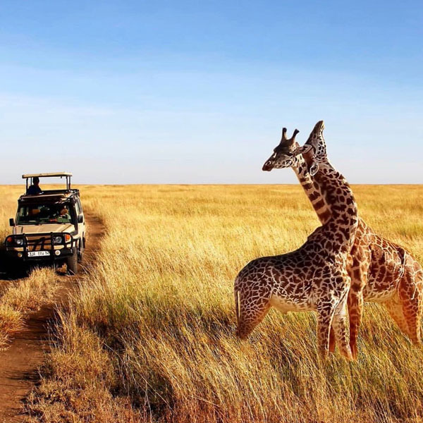 tanzania-safari-cost-tips-fig