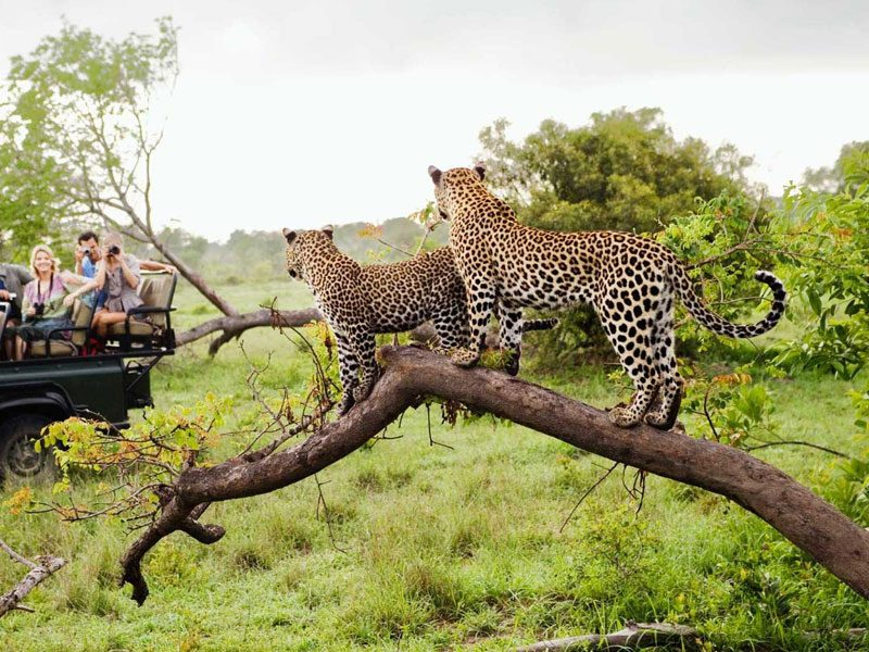 tanzania-safari-packages-gal-3